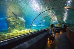 Aquatic tunnel in the Loro parque aquarium Stock Photography
