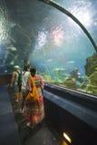 Aquatic tunnel in the Loro parque aquarium Stock Photos