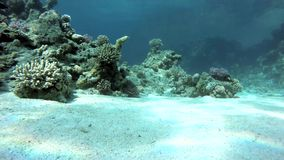Aquatic, Underwater, The corals and fish. stock video footage