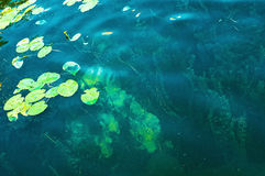 Aquatic vegetations Stock Images