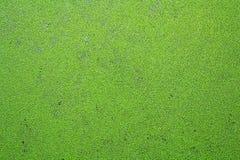 Aquatic weeds Stock Photos