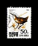 Aquaticus di Rallus del porciglione, serie degli uccelli, circa 1990 Immagini Stock