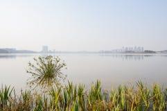 Aquatisch gras bij oever van het meer met stad in afstand op de zonnige winter royalty-vrije stock fotografie