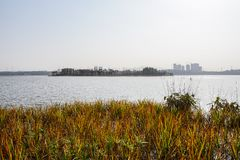 Aquatisch gras in meer op zonnige de winterdag royalty-vrije stock afbeelding