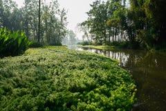 Aquatisch gras in rivier van zonnige de zomerochtend stock foto