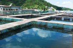 Aquatisch landbouwbedrijf stock foto's
