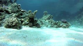 Aquatisch, Onderwater, de koralen en de vissen stock videobeelden