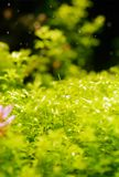 Aquatische groene tuin royalty-vrije stock foto's