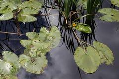 Aquatische natuurlijke achtergrond Stock Afbeeldingen