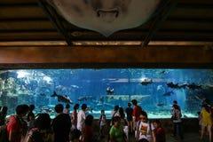Aquatische toeristische attractie Royalty-vrije Stock Foto