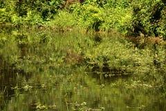Aquatische vegetatie royalty-vrije stock afbeeldingen