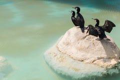 Aquatische vogels op een rots Stock Afbeeldingen