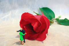 Aqueça o abraço com a rosa Imagem de Stock Royalty Free