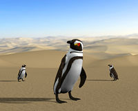 Aquecimento global, alterações climáticas, pinguins do deserto Imagem de Stock