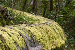 Aqueduc en pierre antique dans la forêt de pin près de la ville de Los Realejos, Ténérife, Espagne photo stock