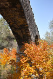 Aqueduct and maple tree Royalty Free Stock Image