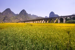 Aqueduct and  rice field in mountainous region Royalty Free Stock Image