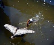 Aquele é meu peixe Foto de Stock Royalty Free
