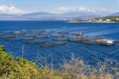 Aquicultuur op Korfu stock foto's