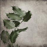 Aquifolium της HOLLY Ilex Στοκ Φωτογραφίες
