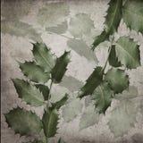 Aquifolium της HOLLY Ilex Στοκ εικόνες με δικαίωμα ελεύθερης χρήσης