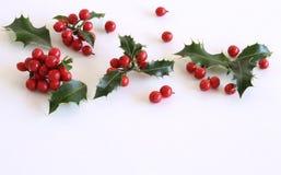Aquifolium för juljärnekIlex som isoleras på vit tabellbakgrund Evergreensidor med röda bär Tomt utrymme för ferietex royaltyfri fotografi