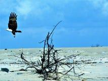 Aquila/αετός Στοκ φωτογραφία με δικαίωμα ελεύθερης χρήσης
