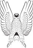 Aquila Immagini Stock