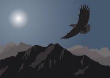 Aquila illustrazione vettoriale