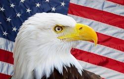 Aquila americana Fotografie Stock Libere da Diritti