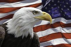 Aquila americana con la bandierina Immagine Stock