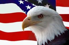 Aquila calva americana con la bandierina Fotografia Stock