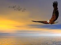 Aquila calva americana, volante liberamente. Immagine Stock