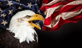 Aquila calva con la bandiera americana fotografia stock