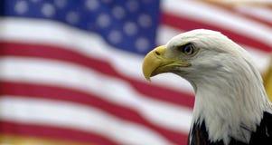 Aquila calva e bandiera americana Fotografie Stock Libere da Diritti