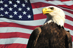 Aquila calva e bandierina degli S.U.A.