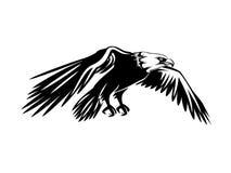 Aquila calva volante Immagini Stock