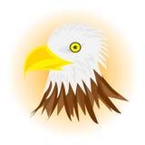 Aquila capa bianca Fotografia Stock