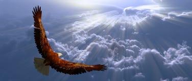 Aquila durante il volo sopra nubi