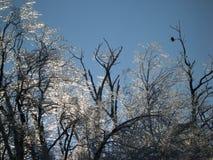 Aquila e ghiaccio Immagini Stock