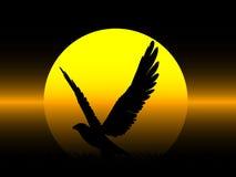 Aquila sulla notte Fotografia Stock