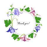 Aquilegia or Columbine flower hand drawn colorful vector botanical illustration, floral round frame isolated on white royalty free illustration