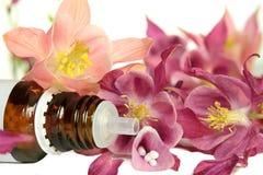 Aquilegia globule for  homeopathy and healing. Aquilegia for  homeopathy with blossoms and gobule Royalty Free Stock Image