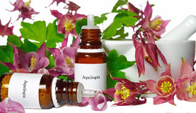 Aquilegia for homeopathy. With blossoms and medical bottels Stock Photo