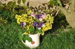 Aquilegia vulgaris και λουλούδι βιασμών Στοκ Εικόνα
