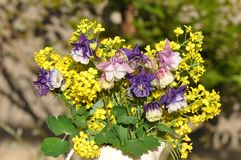 Aquilegia vulgaris και λουλούδι βιασμών Στοκ Φωτογραφία