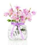 Aquilegia vulgaris flowe Stock Images