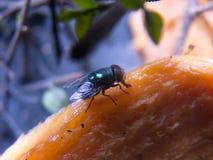 Arándano con el mango maduro fotos de archivo libres de regalías