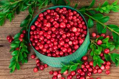 Arándano o lingonberry en un cuenco verde Imágenes de archivo libres de regalías