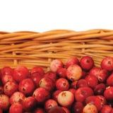 Arándanos de montaña frescos, cesta aislada del vitis-idaea del Vaccinium Foto de archivo libre de regalías